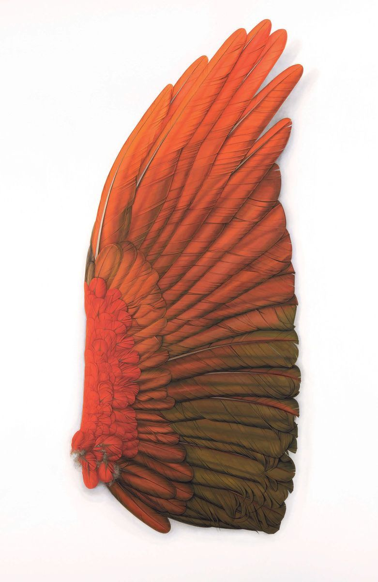 Wings and Feathers - A collection of new paintings