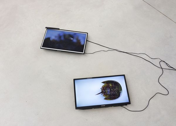 knowledge comes with death's release by Geissler & Sann, Taubert Contemporary (2 of 6)
