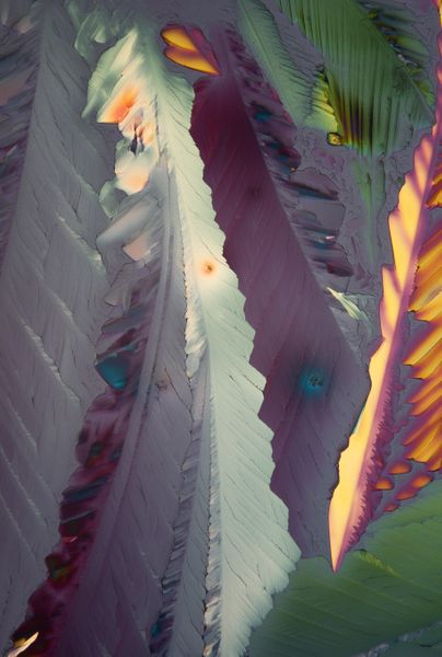 Syngonia jungle by Venelina Katanska, Little Bird Place