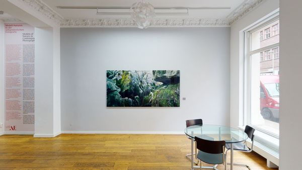 Models of Nature in Contemporary Photography (Group Exhibition), Alfred Ehrhardt Stiftung (5 of 7)